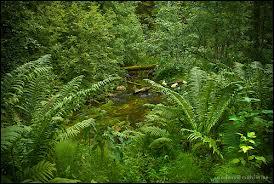 Säterdalens grönska